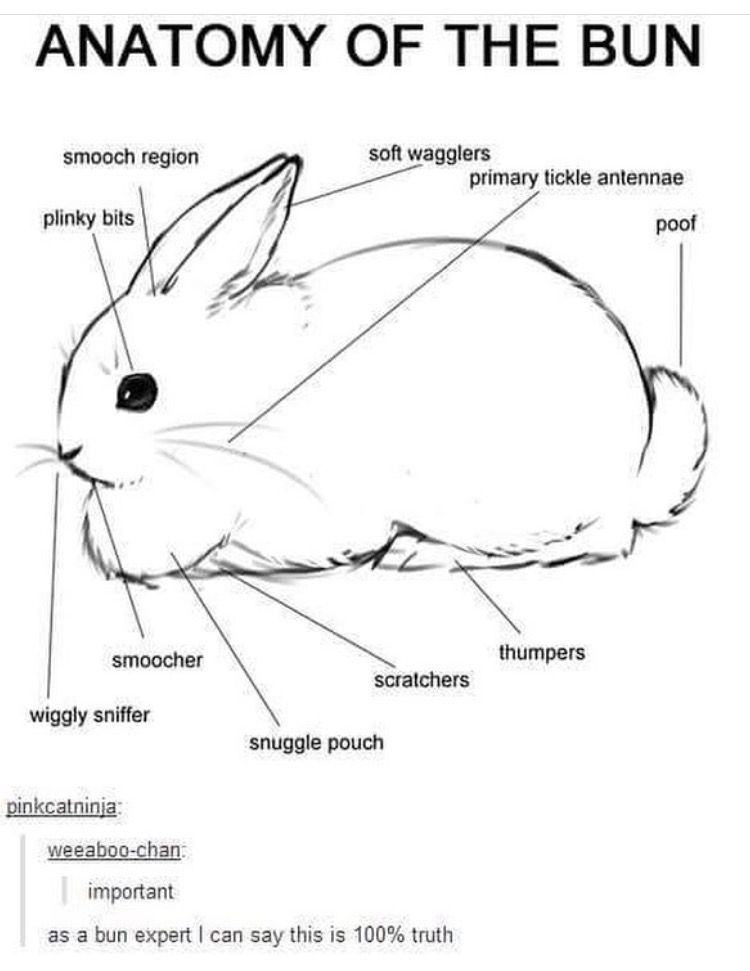 Pin by Cassandra Fundis on Rabbits | Pinterest | Bun bun, Bunny and ...