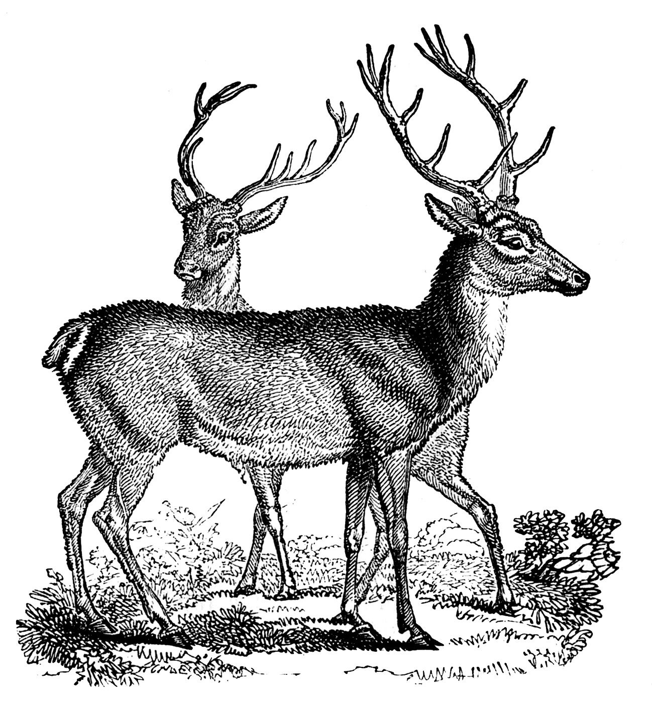 Vintage Clip Art - Lovely Deer - Christmas | Vintage clip art ...