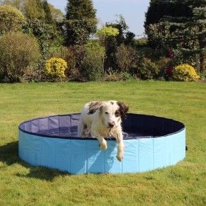 Best Dog Paddling Pools Reviewed For 2020 Petz In 2020 Dogs Best Dogs Dog Pool
