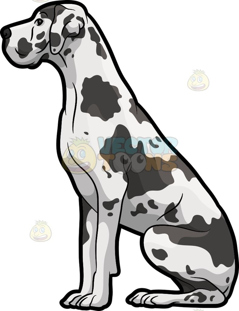 A Spotted Great Dane Dog Great Dane Dogs Cartoon Dog