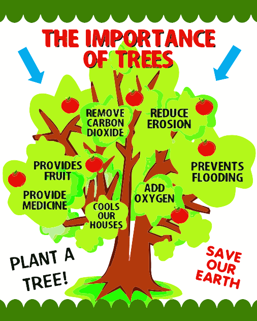 The Importance of Trees! SaveOurEarth PlantATree