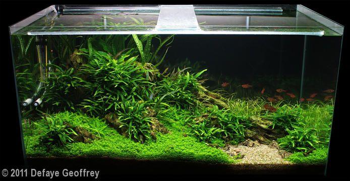 2011 AGA Aquascaping Contest - Entry #94