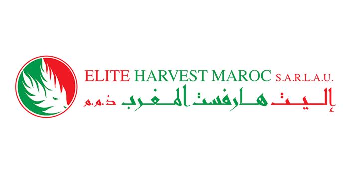 Elite Harvest Maroc Recrute Des Stagiaires Arabic Calligraphy