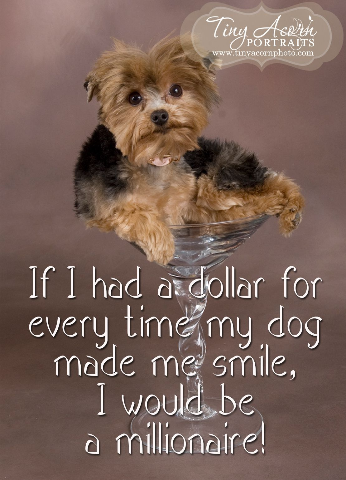 dogquotes minneapolisphotographer