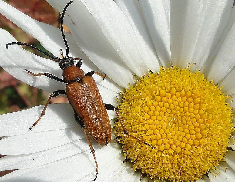 Insectes au jardin un certain ch ne vert insectes et - Insectes nuisibles du jardin ...