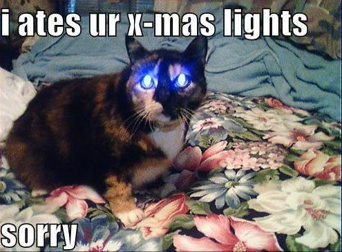 dumb cat!