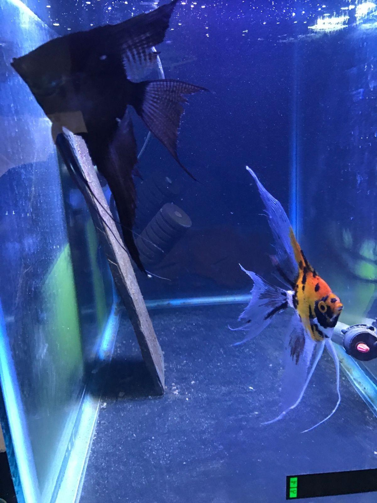 01985513bfb62b6a6368ce005bc83fc1 Frais De Aquarium Tropical Schème