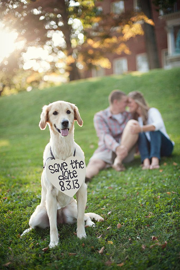 One of 2013's most pinned engagement pics. Dog + save the date = gold.