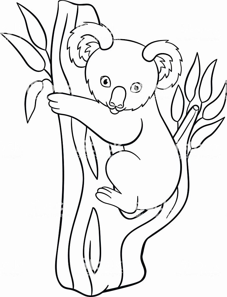 Koala Bear Coloring Page Elegant Coloring Pages Little