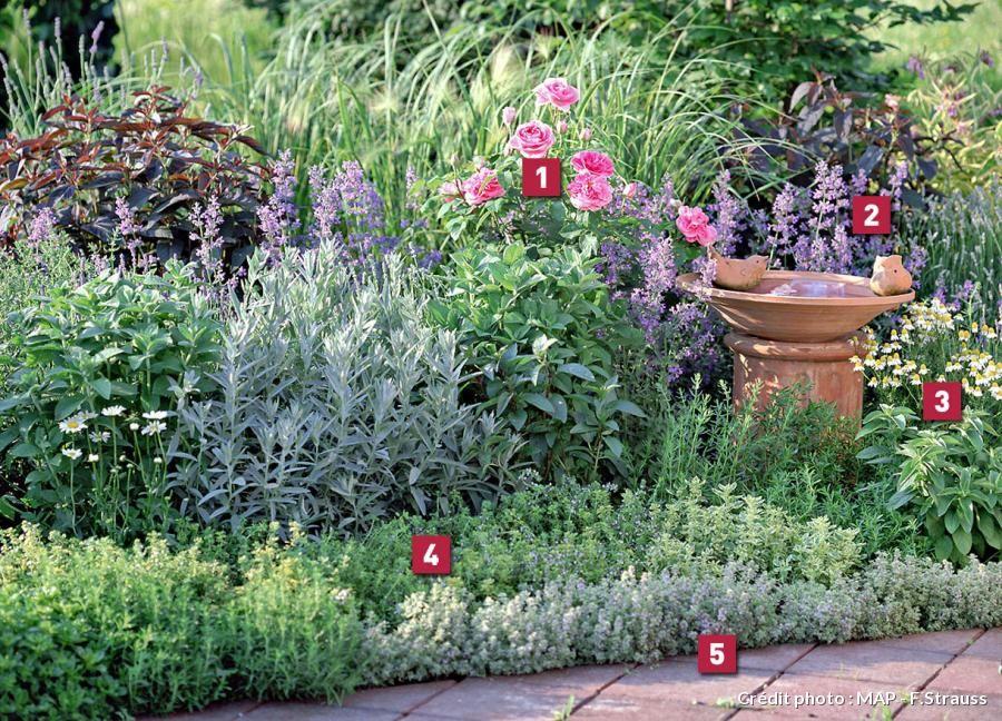 R aliser un massif en terre sableuse thym terre et massif for Association plantes jardin