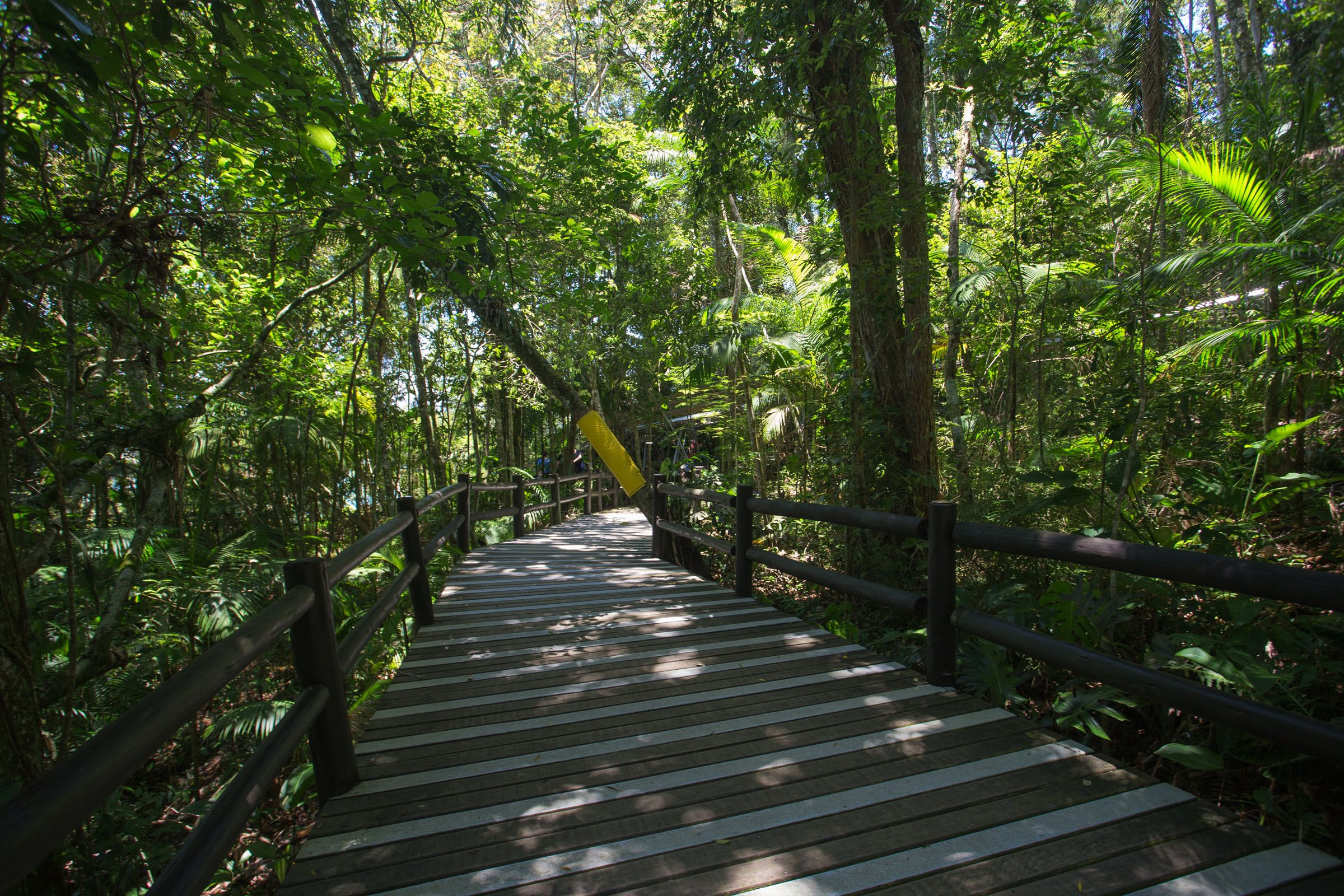 Resultado de imagem para trilhas em balneário camboriú