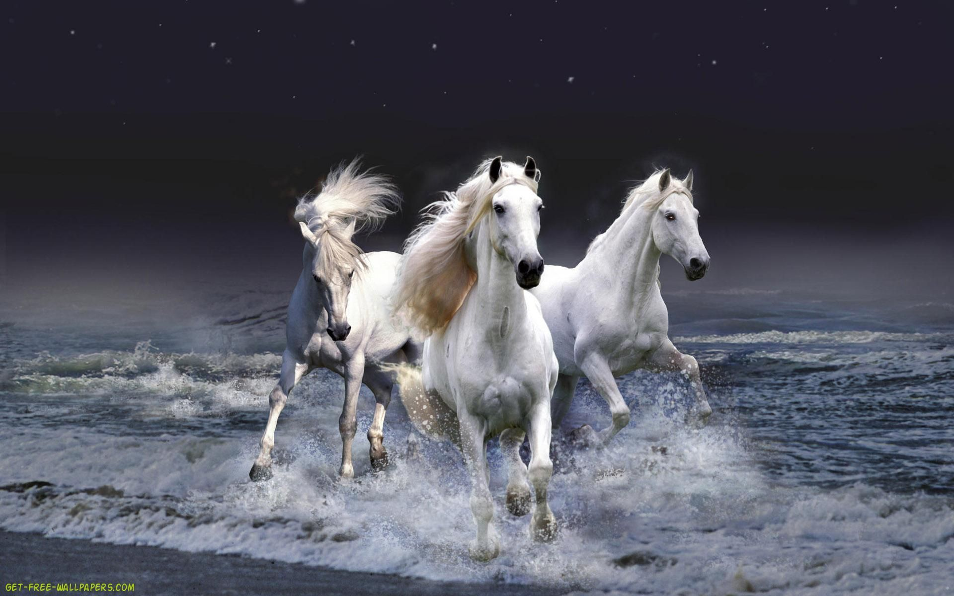 Free Horse Wallpaper Free Horses Screen Savers Wallpapers