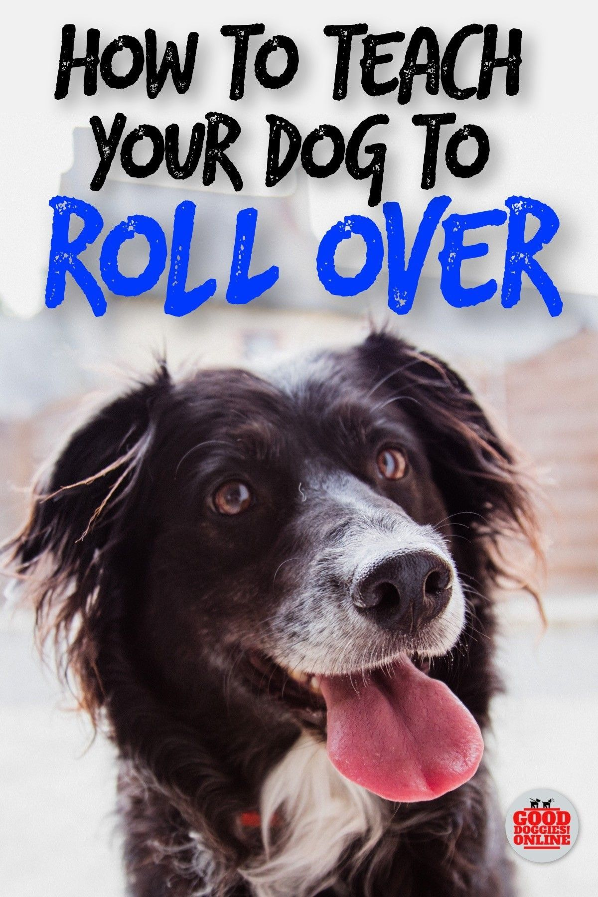 How To Teach Your Dog To Roll Over Dog Training Basic Dog