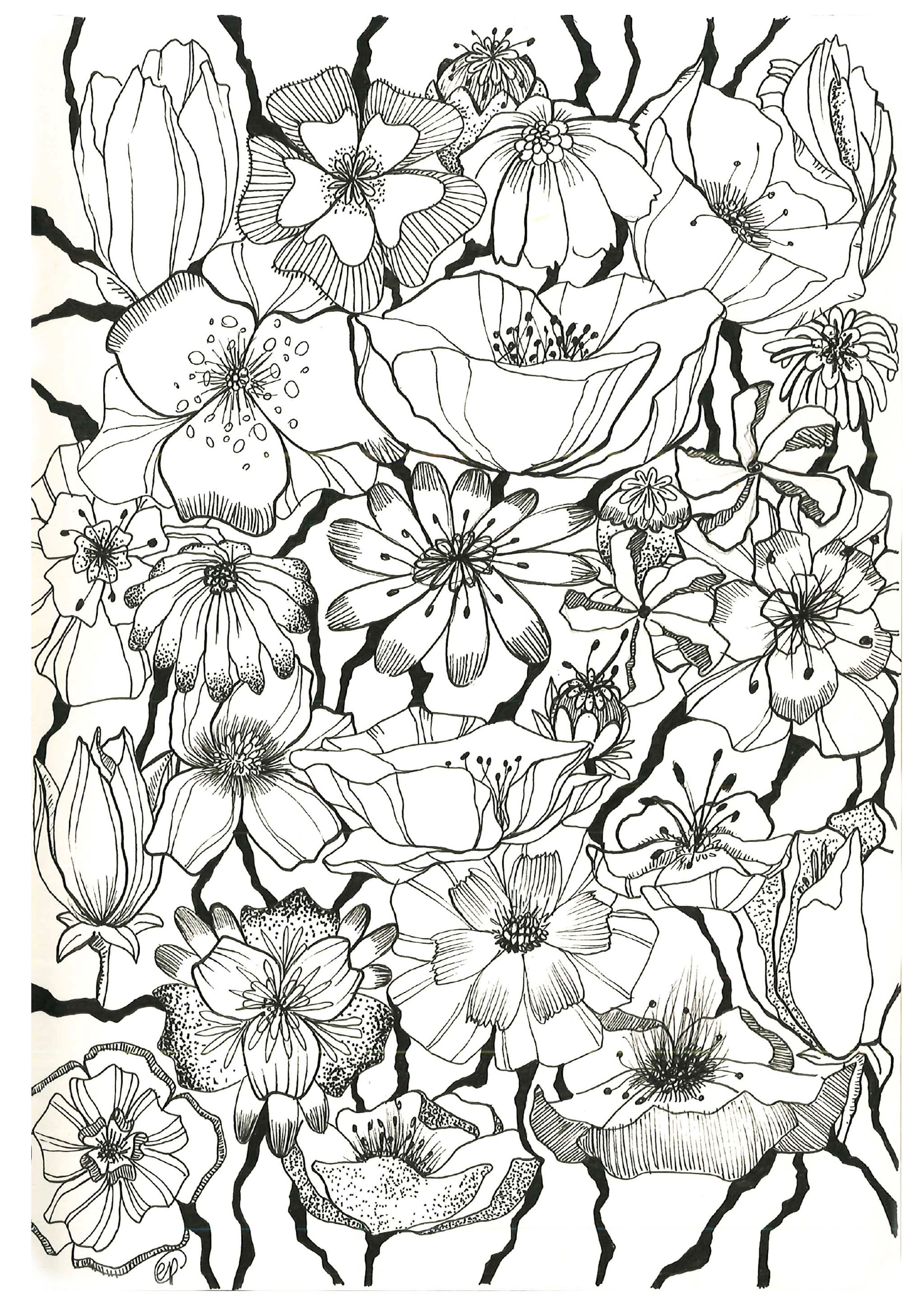 Flower Sketch Pen On Paper May 2015 Ep Designer Adult Coloring PagesColoring SheetsColoring