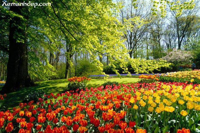 17 Best 1000 images about Lovely Flowers Flower Gardens on Pinterest