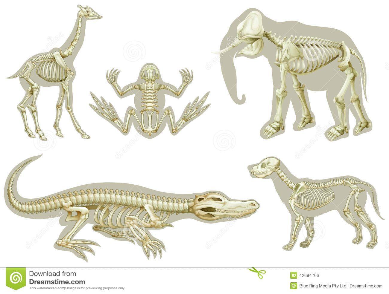 Esqueletos De Animales 42694766 Jpg 1300 984 Esqueleto Animales Vertebrados Animales