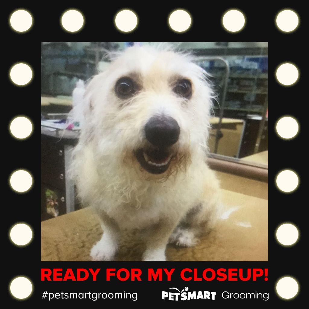 Here S My Pet Photo Pets Animal Photo Petsmart Grooming