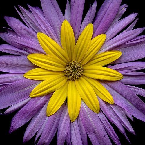 ~~ Helianthus tubero Beautiful gorgeous pretty flowers