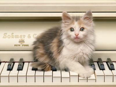 fondos de gatos en el piano