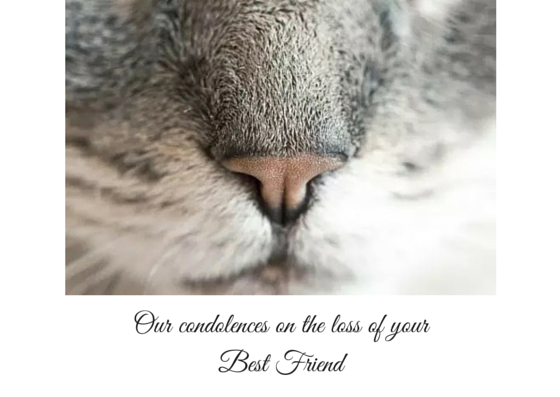 image relating to Free Printable Sympathy Card for Loss of Pet referred to as Absolutely free Printable Sympathy Playing cards For Reduction Of Dog
