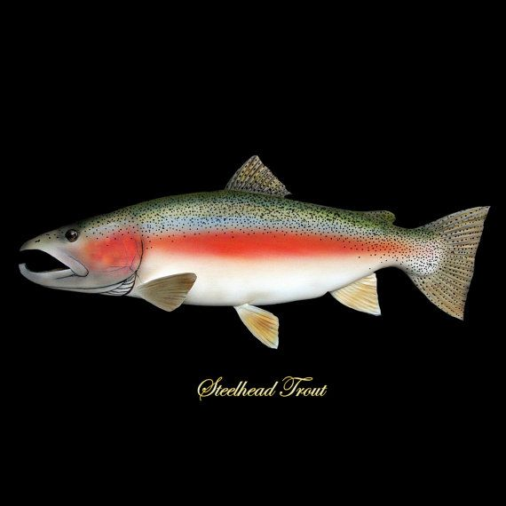 Steelhead Trout Fish Art Fishing Lodge Cabin Decor