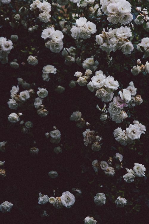 Blogging And Business Flower Aesthetic Nature Beautiful Flowers