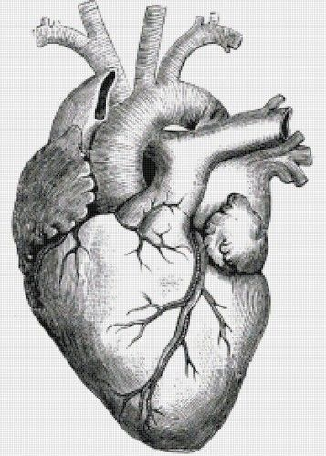 Heart with Ventricles Illustration PDF Handmade Cross-Stitch Pattern ...