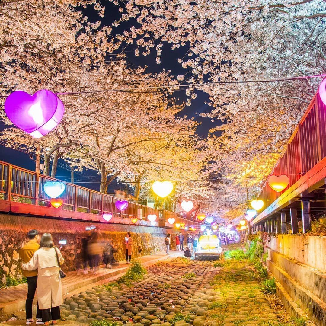 Korea Tourism Organization Ny On Instagram Korea Night Tours Jinhae Gunhangje Festival A Night View Of Cherry Blosso In 2021 Korea Tourism Tourism Spring Festivals