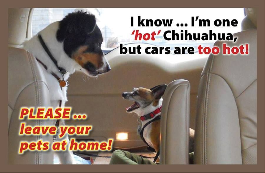 #stoppuppymills The temperature in a vehicle, even in the shade with the windows partly open, can rapidly reach a level high enough to seriously harm or even kill your pet. A dog can be overwhelmed by heat in as little as 10 minutes. Even on seemingly mild days, an enclosed car can be deadly. When it is 72 degrees outside, a car's internal temperature can climb to 116 degrees within one hour. Please read more http://milldogrescue.org/dogs-hot-cars/
