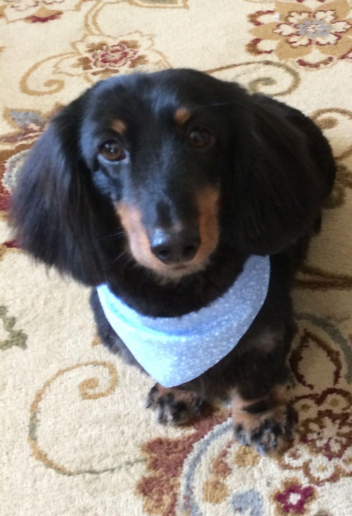 Pin On Adorable Doggies