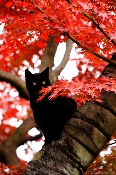 Black cat in the tree animals cat trees autumn fall | Crazy cats, Black  cat, Cat love