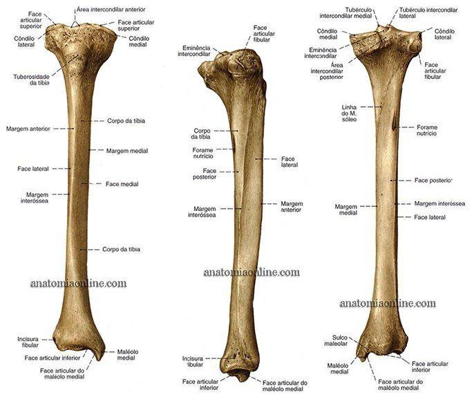Anatomia Online Ossos Do Membro Inferior Com Imagens