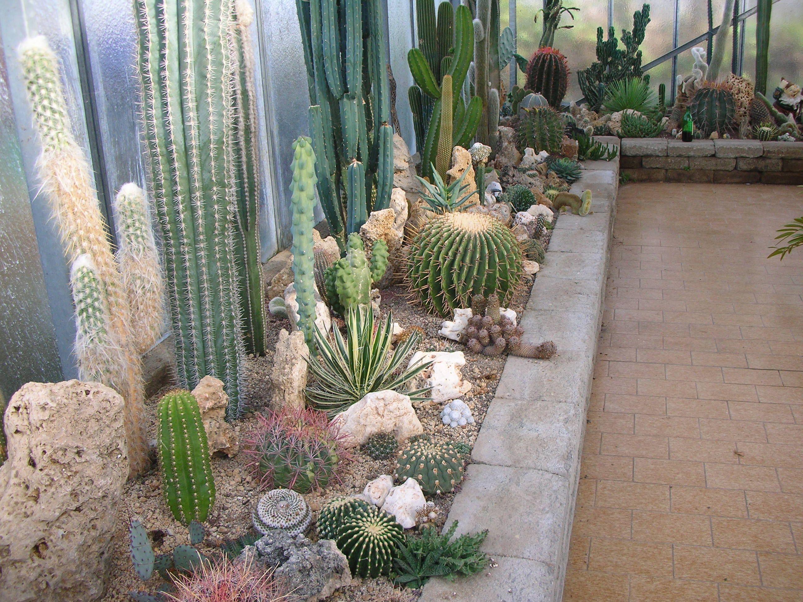 Aiuole piante grasse cerca con google aiuole kalami - Composizione piante grasse giardino ...