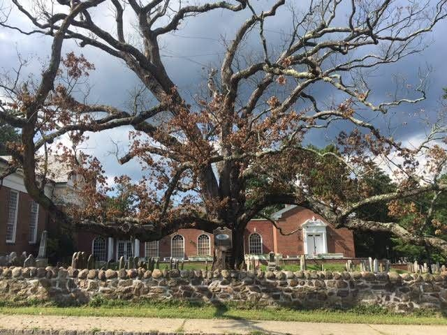 Oak Tree reaches end of life