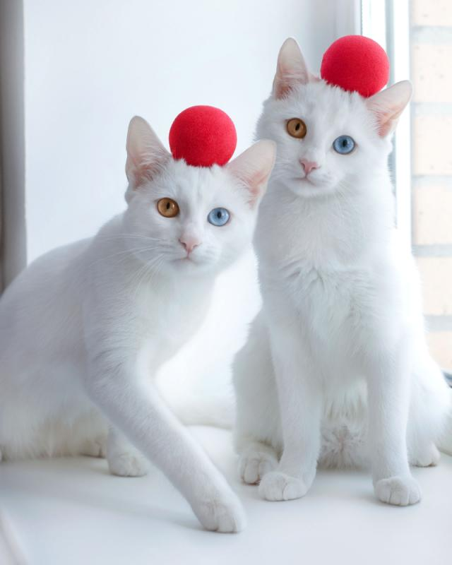 PHOTOS Adorable twin cats showcase their fascinating eye