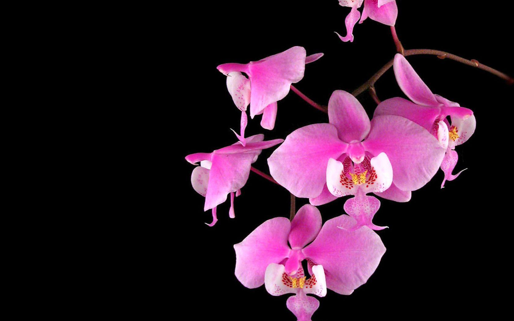 Orchid plant life pinterest