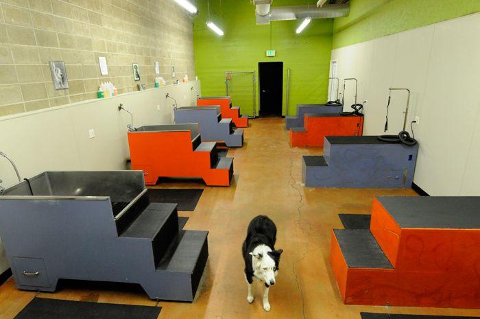 Noahs Arf Doggy Daycare and PetCare Northwest Portland