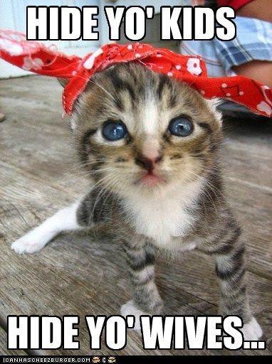 Hide Yo Kids Funny Cat Memes Funny Animals Funny Cats