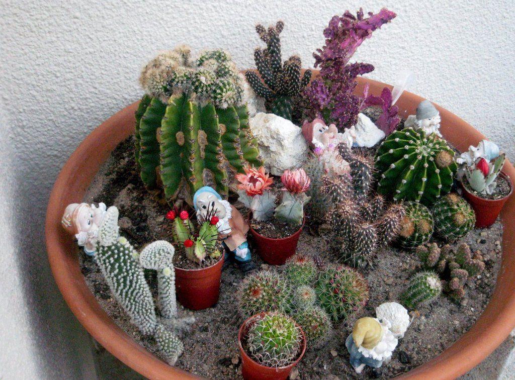 Piedras decorativas de colores en chile buscar con - Cactus en macetas pequenas ...