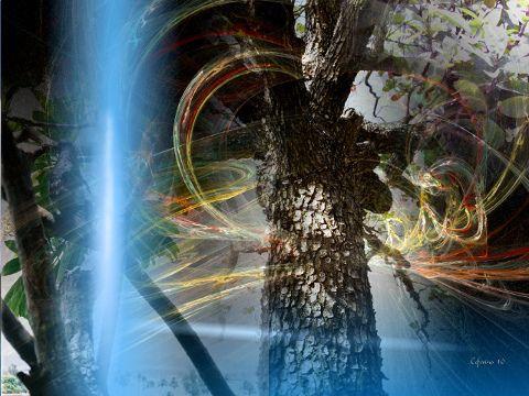 Título: «Portento natural» Medio: Fotografía digital Autor: Ceferino Díaz