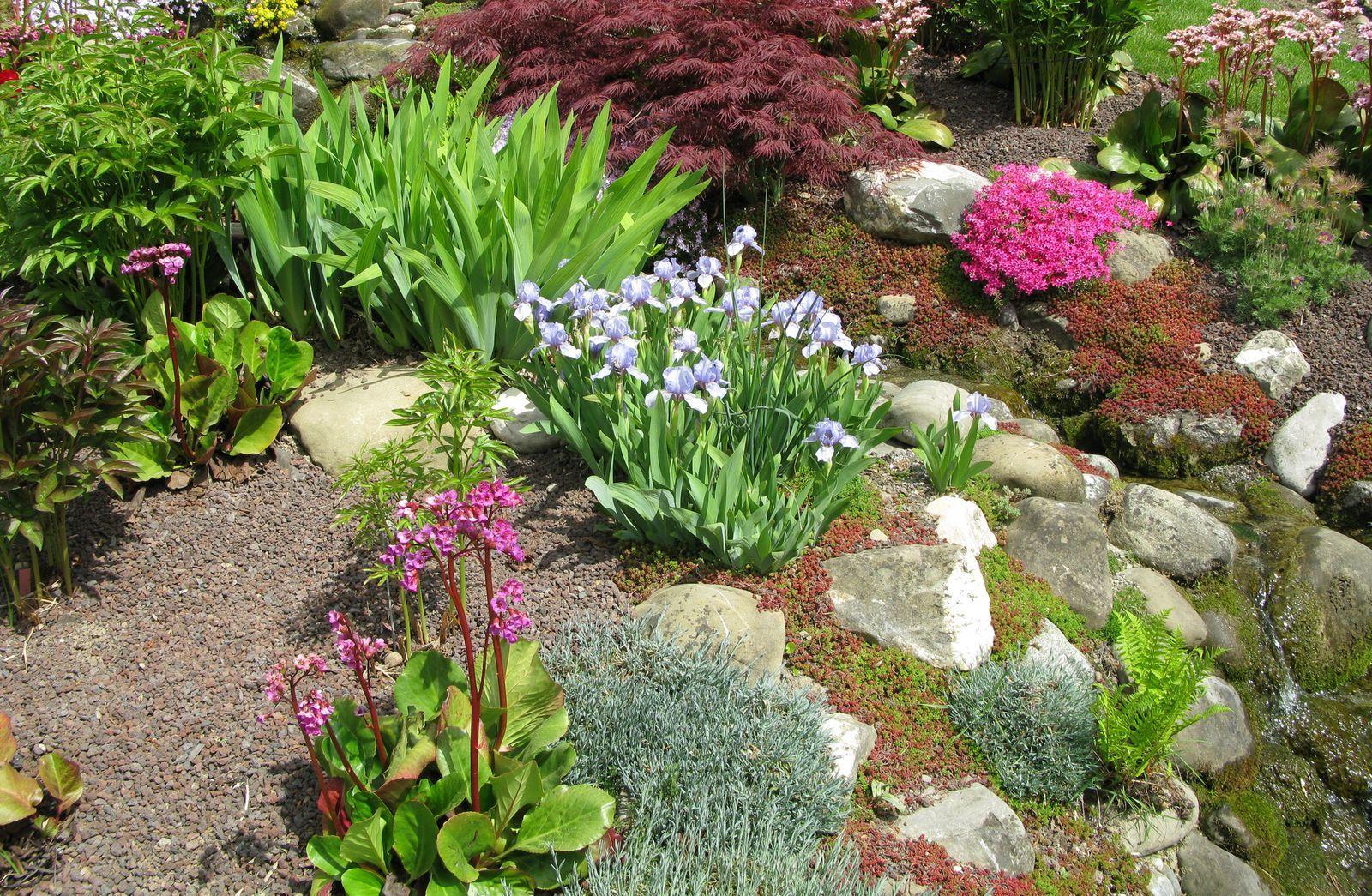 How To Create A Rock Garden In 2020 Rock Garden Plants Landscaping With Rocks Rock Garden Design