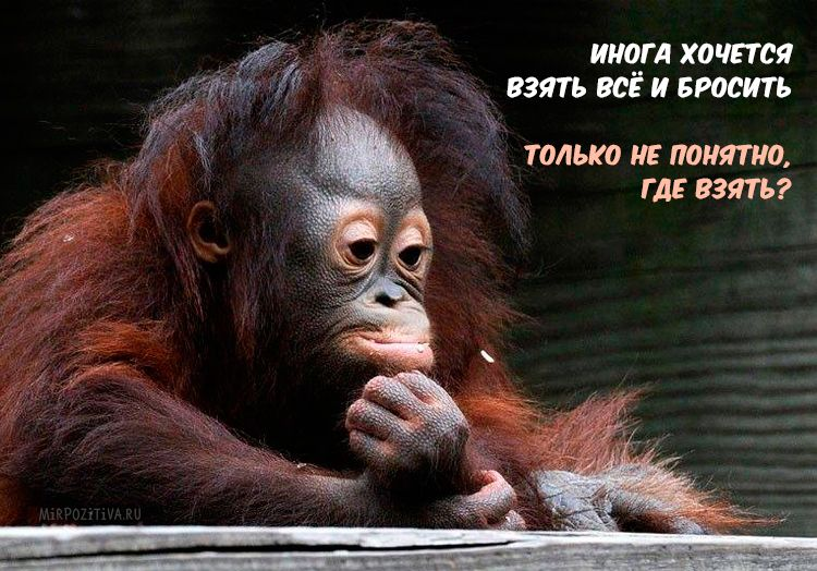 Надписью чебурашка, смешные обезьянки с надписями картинки