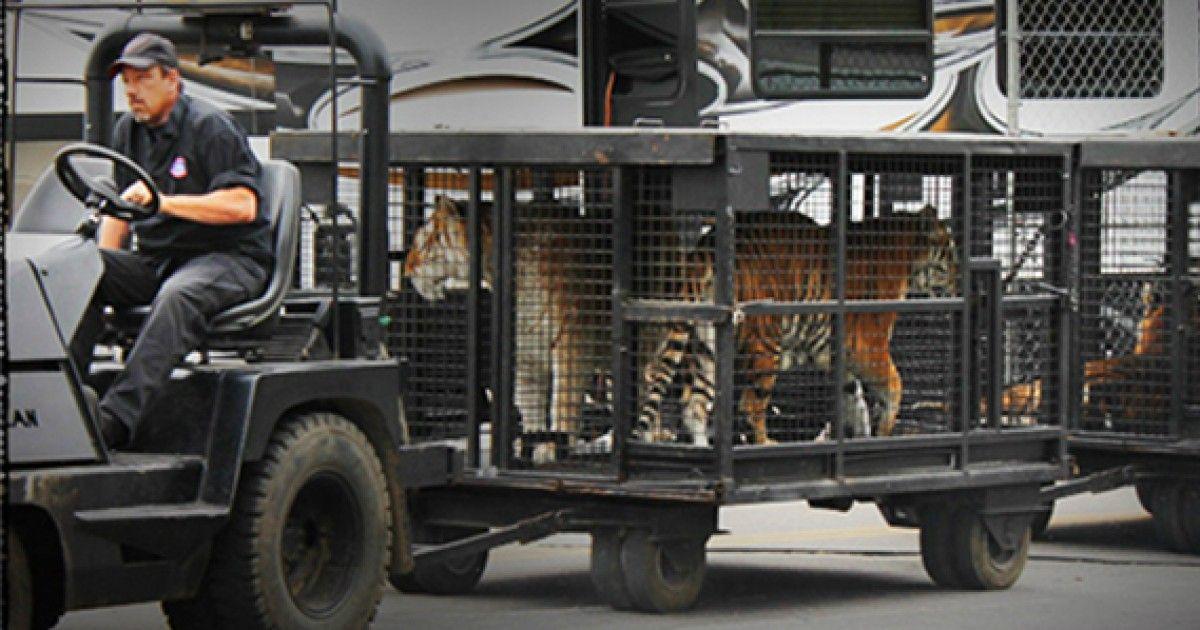 Big News From Big cats, Animal rights organizations
