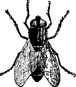 fly bug insect clip art at clker com vector clip art online rh pinterest com dragonfly clipart black and white flies clipart black and white