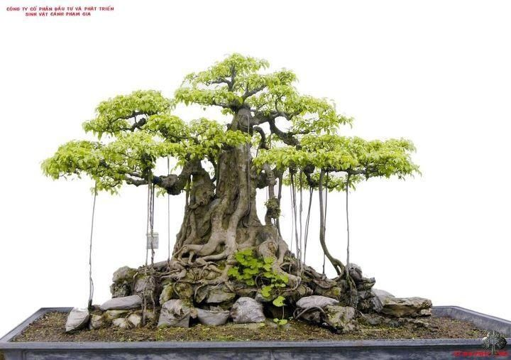 Pin By Pawel Wysocki On Ɨ¥æœ¬ Bonsai Tree Bonsai Garden Bonsai