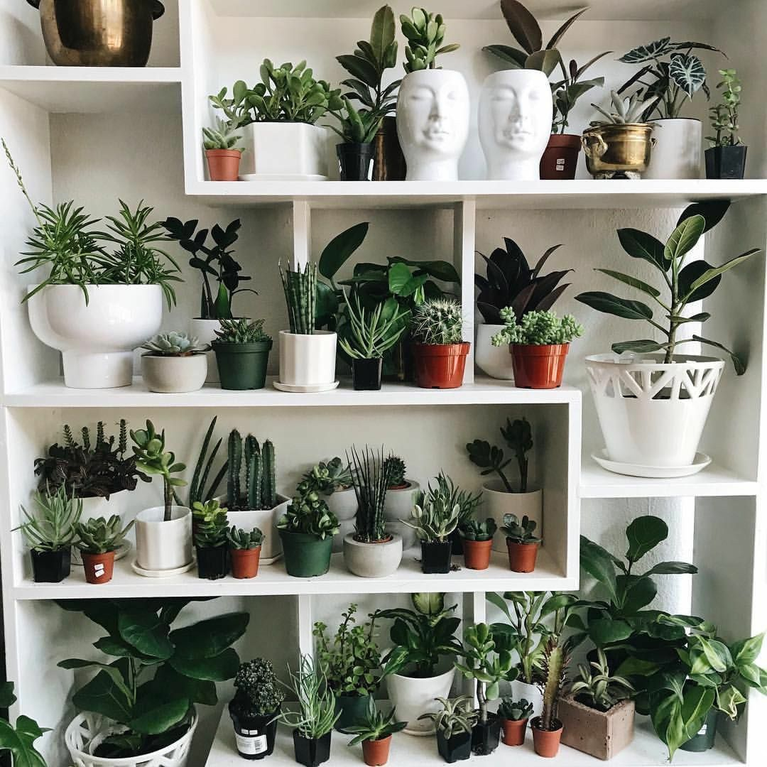 30+ Decorate With Plants Ideas For Your Indoor House