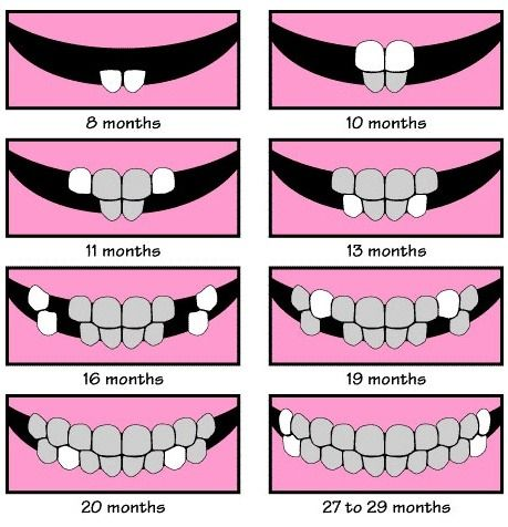 Baby Teeth Chart AllyS Teeth DidnT Do Exactly This But ItS A
