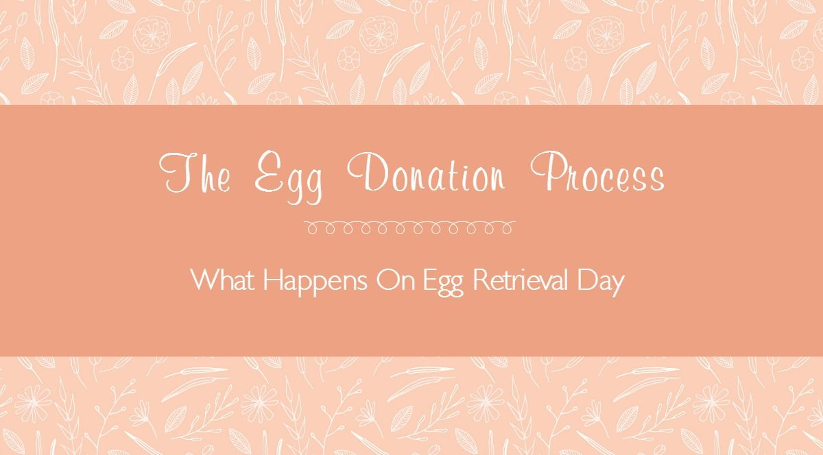 The egg donation process comes to a head on egg retrieval
