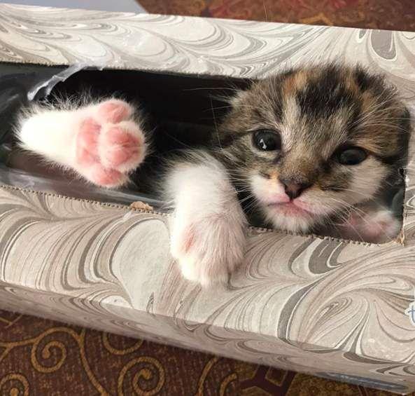 Woman Spends An Hour Looking For Kitten And Finds Her In The Weirdest Place Sleeping Kitten Kittens Cute Animals