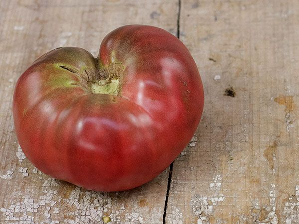Black Krim Is A Heirloom Tomato From Russia With Very 400 x 300